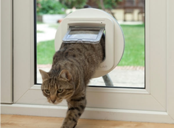 Cat Flap fitted in Glass Door